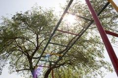 Kolorowi małpi bary pod światłem słonecznym fotografia royalty free