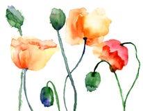 Kolorowi maczków kwiaty Zdjęcia Royalty Free