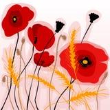 Kolorowi maczki i wheatear Obrazy Royalty Free