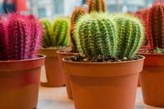 Kolorowi mali kaktusy w garnkach obrazy stock