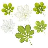 Kolorowi mozaika kasztanu liście łatwy modyfikować Obrazy Stock