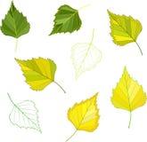 Kolorowi mozaiki brzozy liście łatwy modyfikować Obraz Stock