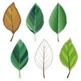 Kolorowi mozaiki jabłka liście łatwy modyfikować Fotografia Stock