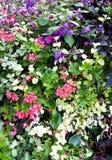 Kolorowi ogródów kwiaty Fotografia Royalty Free