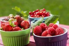 Kolorowi owocowi puchary Zdjęcie Stock