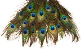 Kolorowi pawi piórka odizolowywający Obrazy Stock