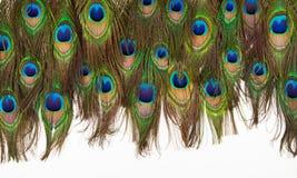 Kolorowi pawi piórka odizolowywający Zdjęcia Stock