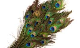 Kolorowi pawi piórka odizolowywający Zdjęcia Royalty Free