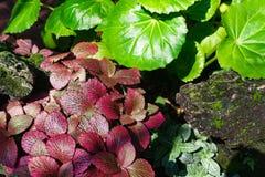 Kolorowi piękni menchii zieleni liście nerw roślina pl lub mozaika zdjęcie stock