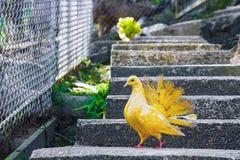 Kolorowi pidgeons Obraz Royalty Free