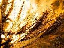 Kolorowi podwodni dandelion ziarna Zdjęcia Royalty Free