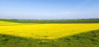 Kolorowi pola w wiośnie Zdjęcia Royalty Free