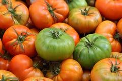 kolorowi pomidory Zdjęcie Stock