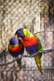 Kolorowi ptaki Obrazy Stock