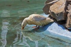 Kolorowi ptaki 2 Zdjęcie Stock