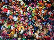 Kolorowi sezonowi kwiaty - dekoracyjny przygotowania zdjęcia royalty free