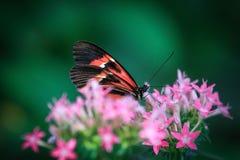 Kolorowi skrzydła Zdjęcie Royalty Free