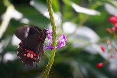 Kolorowi skrzydła Zdjęcie Stock