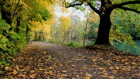 Kolorowi Spada liście I droga przemian brzeg rzekim fotografia royalty free
