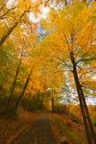 Kolorowi spadek scenerii krajobrazy Obrazy Stock