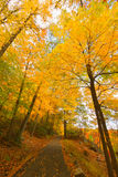 Kolorowi spadek scenerii krajobrazy fotografia stock