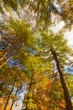 Kolorowi spadek scenerii krajobrazy Obraz Stock