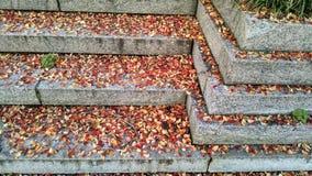 Kolorowi spadków liście na krokach Fotografia Stock