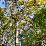 Kolorowi treetops w lesie widzieć spod spodu fotografia stock