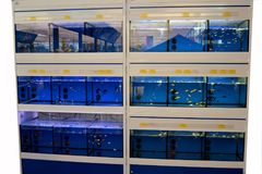 Kolorowi Tropikalni rybi akwaria zdjęcie royalty free