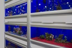 Kolorowi Tropikalni rybi akwaria zdjęcia stock