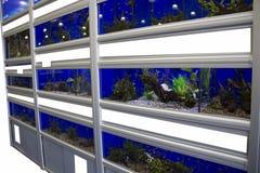 Kolorowi Tropikalni rybi akwaria fotografia royalty free