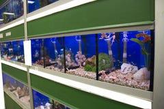 Kolorowi Tropikalni rybi akwaria fotografia stock