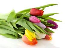 kolorowi tulipany obraz royalty free