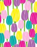 Kolorowi tulipany na białego tła wektoru bezszwowym wzorze Zdjęcia Stock