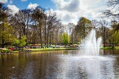 Kolorowi tulipany na brzeg rzeki w Keukenhof parku w Amsterdam terenie, holandie Wiosny okwitnięcie w Keukenhof Zdjęcia Royalty Free