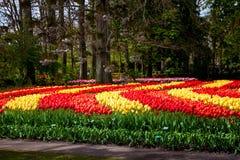 Kolorowi tulipany w Keukenhof parku w Amsterdam terenie, holandie Obrazy Stock