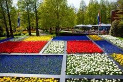 Kolorowi tulipany w Keukenhof parku w Amsterdam terenie, holandie Wiosny okwitnięcie w Keukenhof Obraz Stock