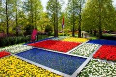 Kolorowi tulipany w Keukenhof parku w Amsterdam terenie, holandie Wiosny okwitnięcie w Keukenhof Zdjęcia Stock