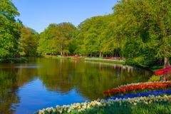 Kolorowi tulipany w Keukenhof parku, Holandia Obraz Stock