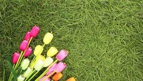 Kolorowi tulipany w polu Wiosna - plakat z bezpłatnego teksta przestrzenią, mieszkanie nieatutowy, odgórny widok kiedy było tła m zdjęcie wideo