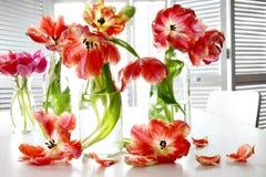Kolorowi wiosna tulipany w dojnych butelkach na stole Zdjęcia Royalty Free