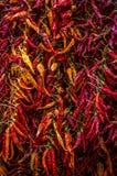 Kolorowi wysuszeni chili pieprze przy Włoskim bazarem zdjęcie royalty free
