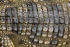 Kolorowi wzory i skóra krokodyl zdjęcia stock