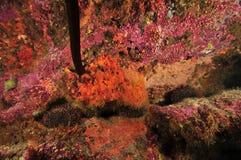 Kolorowi zaskorupia się bezkręgowowie zdjęcie stock