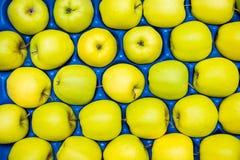 Kolorowi zieleni jabłka układający w błękitnej skrzynce Fotografia Royalty Free