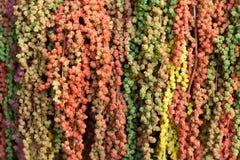 Kolorowy amarant Obraz Stock