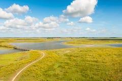 Kolorowy bagna teren w lecie Zdjęcia Royalty Free