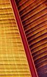 Kolorowy Bananowy liść Zdjęcia Royalty Free
