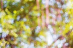 Kolorowy bokeh przy drzewami Zdjęcie Stock
