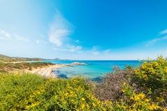 Kolorowy brzeg w Scoglio Di Peppino plaży Obrazy Royalty Free
